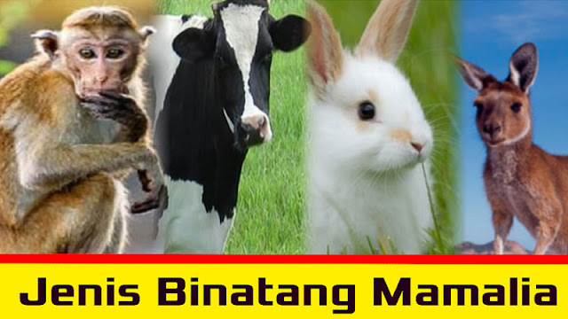 Gambar Binatanh Menyusui