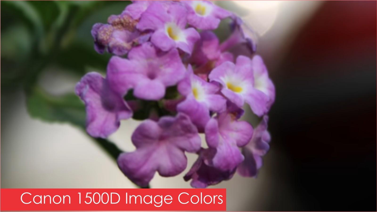 Canon 1500D Camera Image Performance