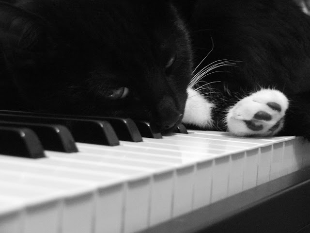 Piano Cat I by Nina A. J. G. from flickr (CC-ND)