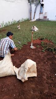 Jual Rumput Gajah Mini Dibogor | Pasang Rumput Gajah Mini Bogor | Pusat Rumput Gajah Mini Murah