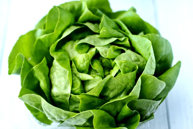 Head of bibb lettuce