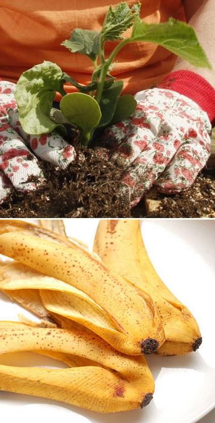 The Backyard Garden Banana Peels As Fertilizer