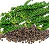 Ayurveda black pepper