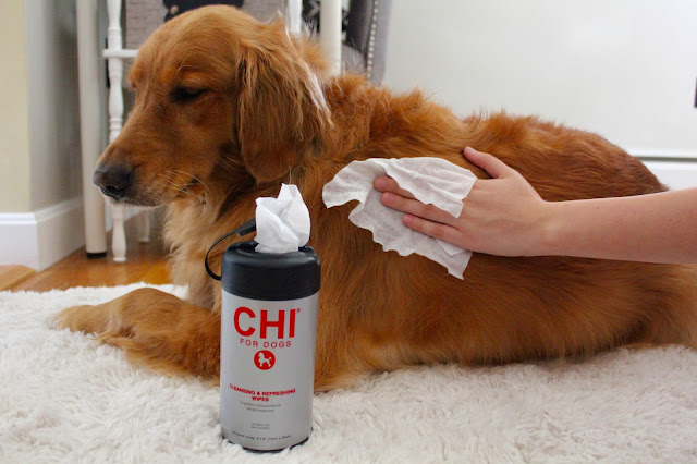 Grooming your dog at home with CHI for Dogs cleansing and refreshing wipes