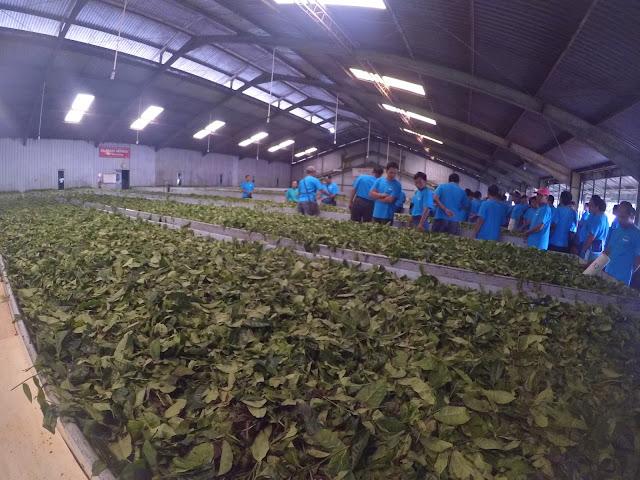 Pabrik Agrowisata Kebun Teh Tambi