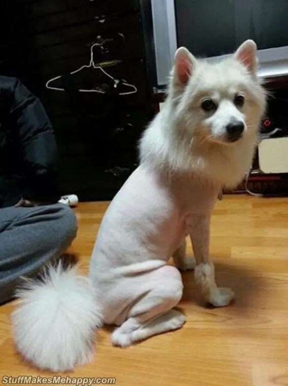 Best Pet Hairstyles Images, best dogs haircuts, best cats haircuts