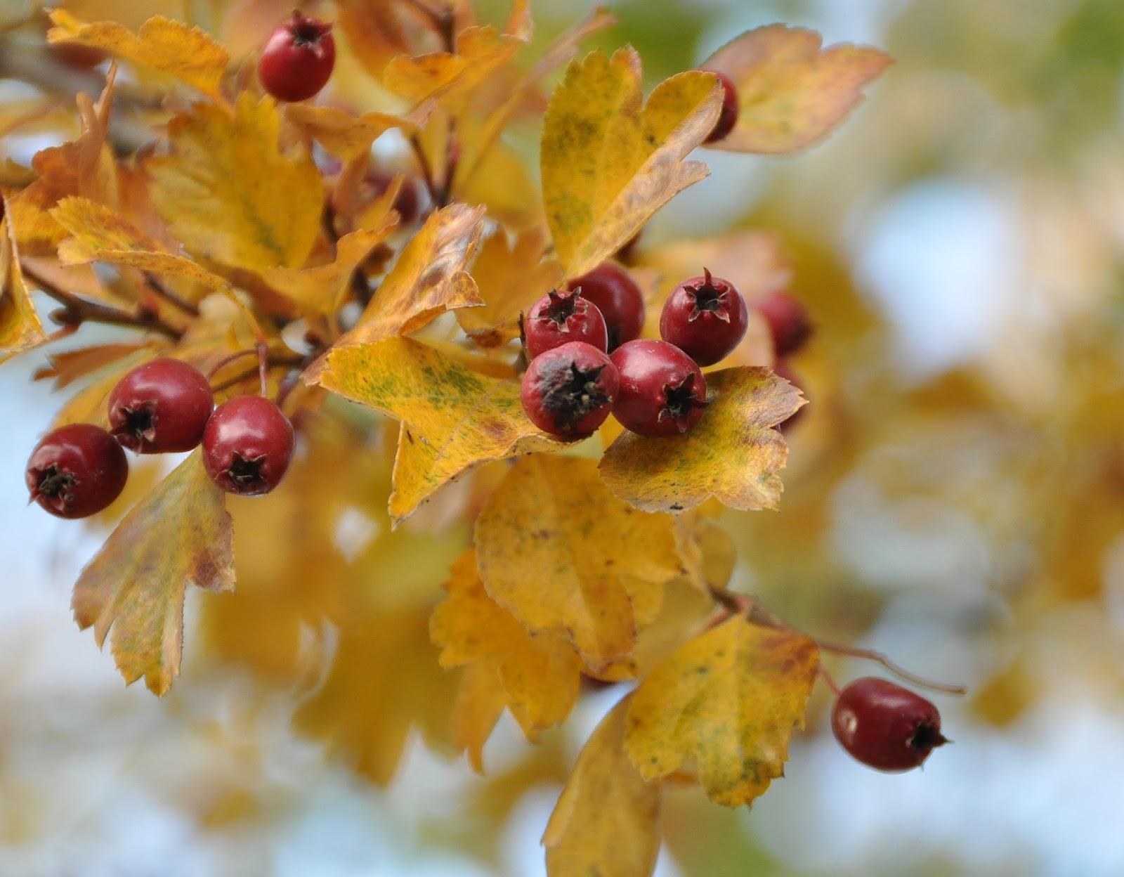 Ostatnie chwile kolorowej jesieni.