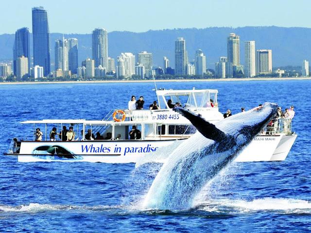 Whale Watching and Marine Research Tour