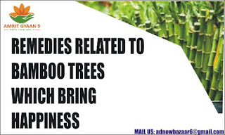 REMEDIES RELATED TO BAMBOO TREES WHICH BRING HAPPINESS AND PROSPERITY