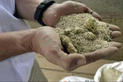 6.000 ton Beras Membusuk di Gudang Penyimpanan Bulog