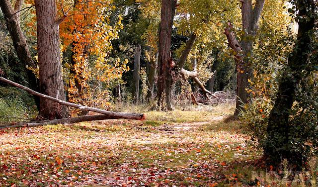 El bosque animado, 2014 Abbé Nozal