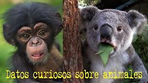 Datos curiosos sobre los animales
