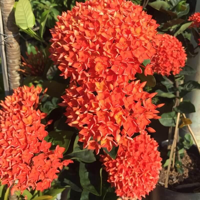 Các loại hoa tại Làng Hoa Sa Đéc 8