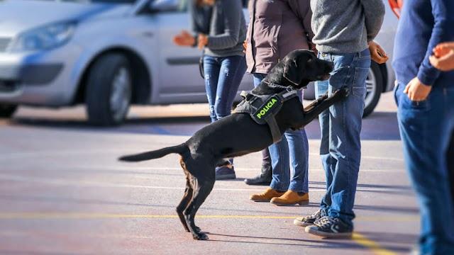 Τα σκυλιά ενδέχεται να εντοπίσουν το COVID-19 καλύτερα από τις τρέχουσες δοκιμές