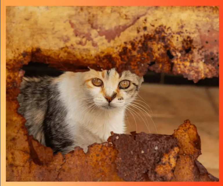 Gatito en abandono