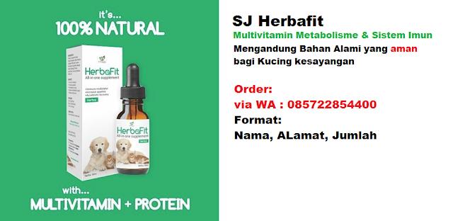 vitamin untuk kucing persia