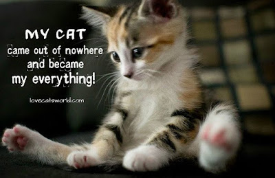 cat quotes my cat came out of nowhere and became my everything!