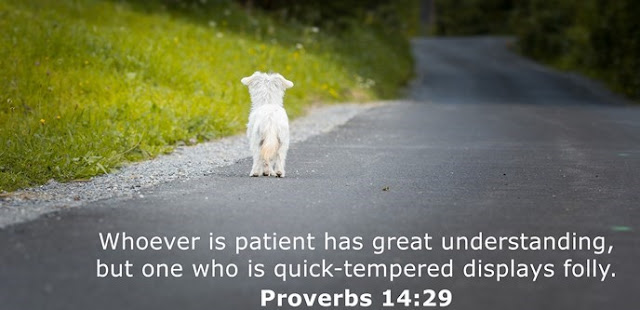 Whoever is patient has great understanding, but one who is quick-tempered displays folly.
