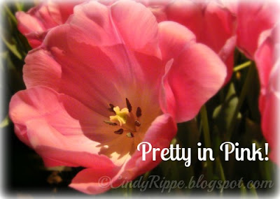 Pink tulips, spring flowers, Pink is an attitude, Pretty in Pink, Florals-Family-Faith, Cindy Rippe