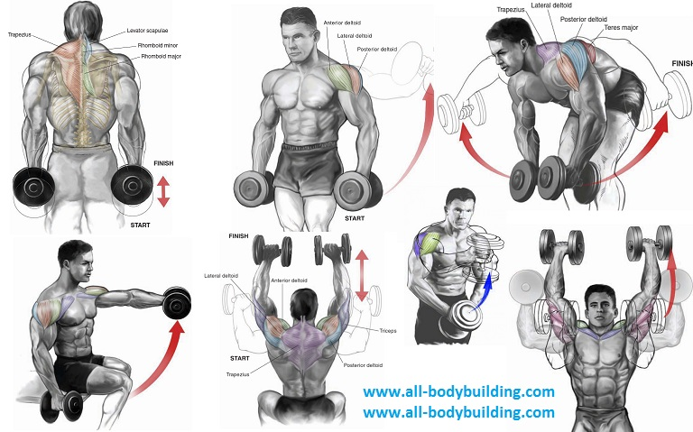 Top 6 Dumbbell Exercises For Shoulders Multiple Fitness
