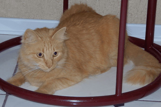 gato-leo-masso-vita