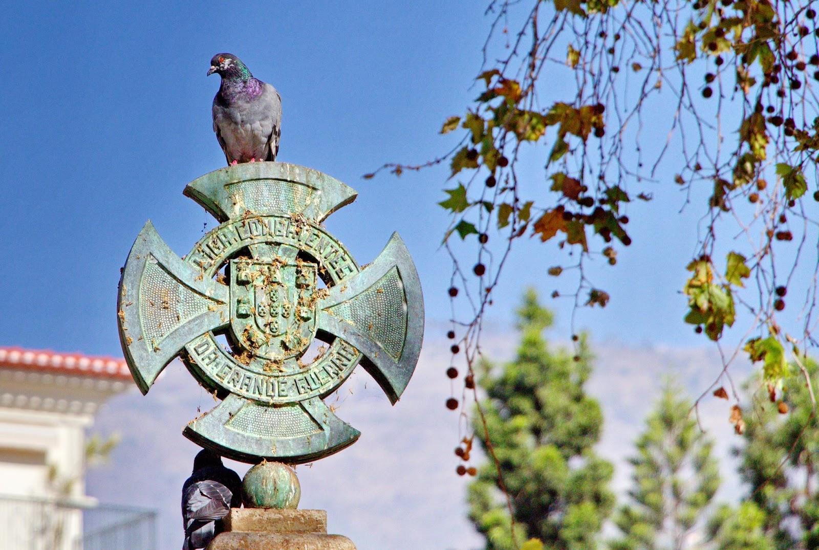 o pombo empoleirado