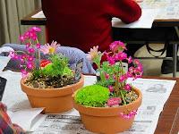 園芸教室「山野草の寄せ植え体験」