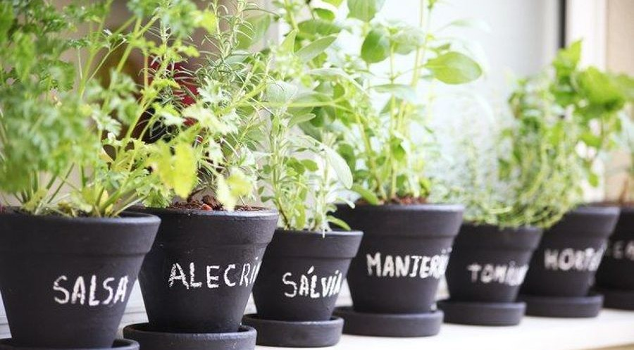 Horta em casa: Plantas fáceis e rápidas de cultivar
