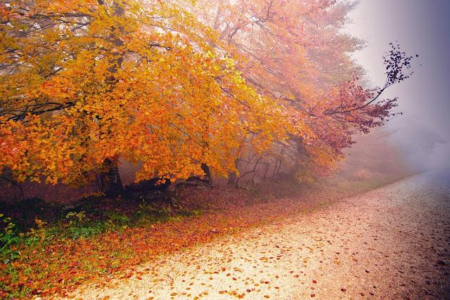 Bomen en oranje herfstbladeren aan de kant van de weg
