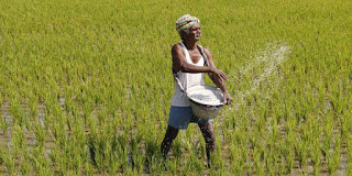 farmer-will-purchase-seeds-on-app