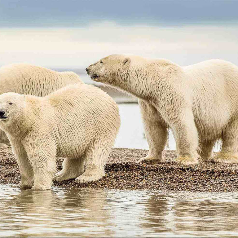 All About the World's Largest Bear Species