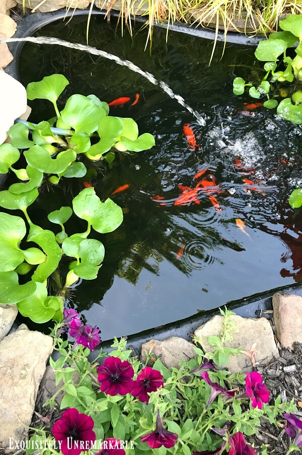 Backyard pond with goldfish and floating plants