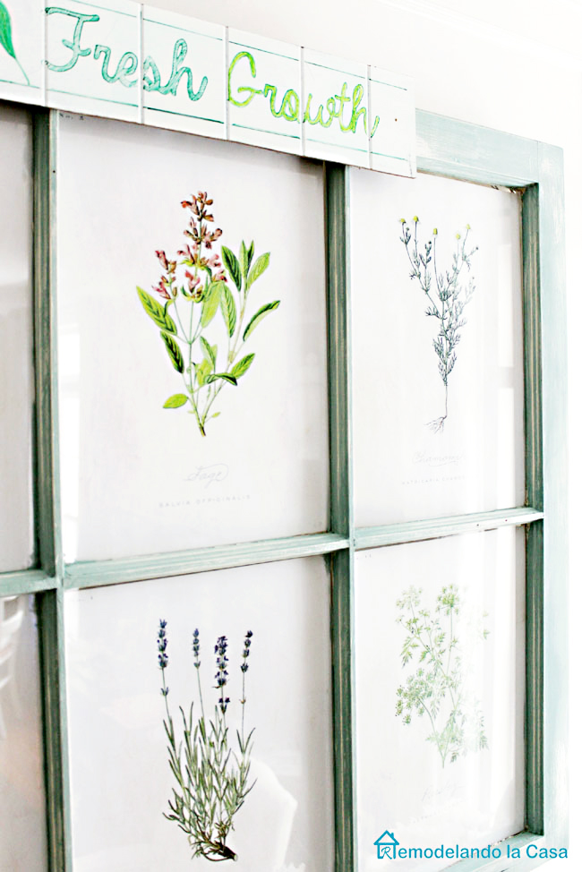 Botanical prints in old window