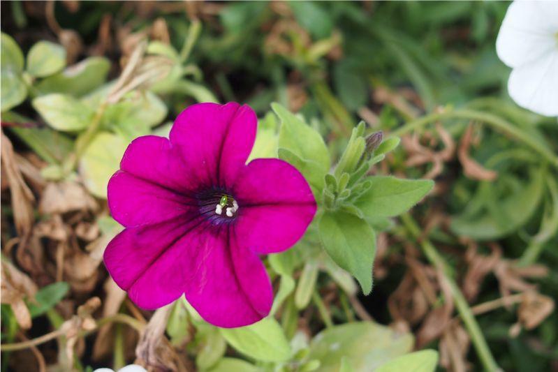 Pflanzenschönheit - Du hast die Wahl