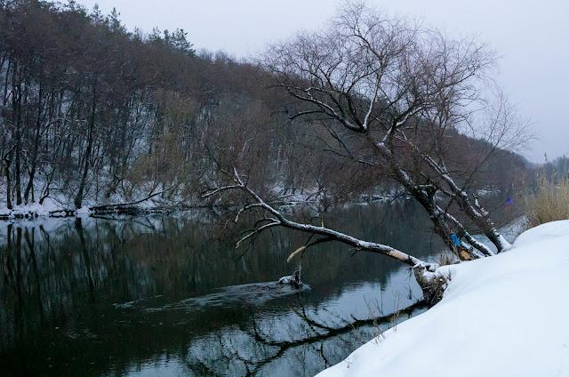 дерево на березі Сіверського Донця