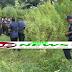 মে'হেরপুরে দুলাল ১৫ কাঠা জ'মিতে ক'রছে গাঁ' জা চা'ষ
