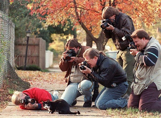 Crazy Photographers Click the Cat Pic