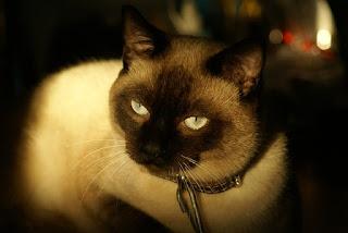 5 Mitos Tentang Kucing yang Sangat Misteri, Kamu Percaya Gak?