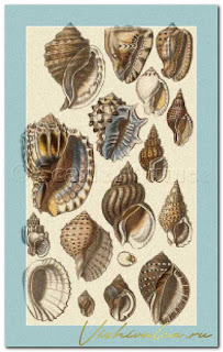 "Download cross stitch scheme SOW001 ""Tropical Harp and Conch Shells"" Scarlet Quince"