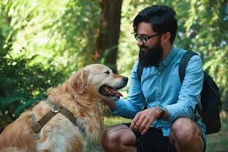 Conheça as 5 raças de cachorro mais companheiras