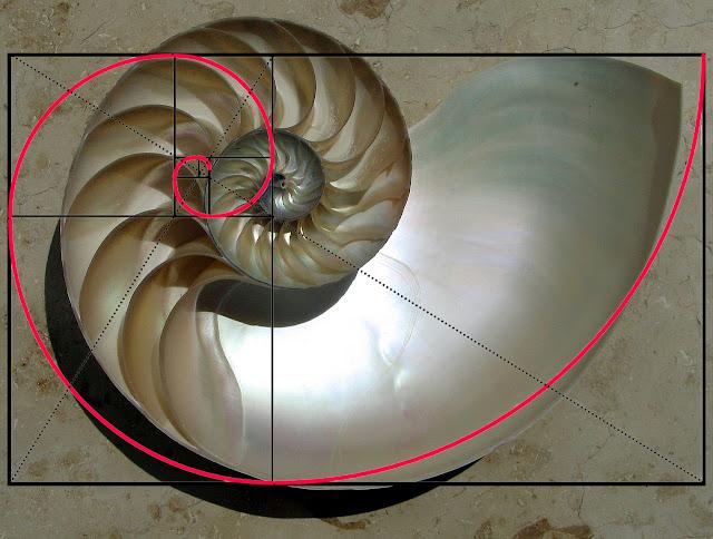 Foto y espiral de Wikipedia Commons, autor de la foto Chris 73, autor de la espiral Luiz Real.