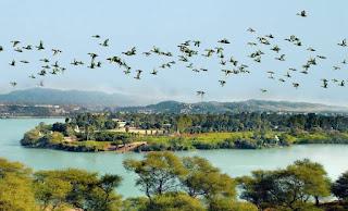 नंदूरमहामेश्वर, नासिक (महाराष्ट्र