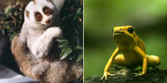 10 adorable looking animals that could actually kill you