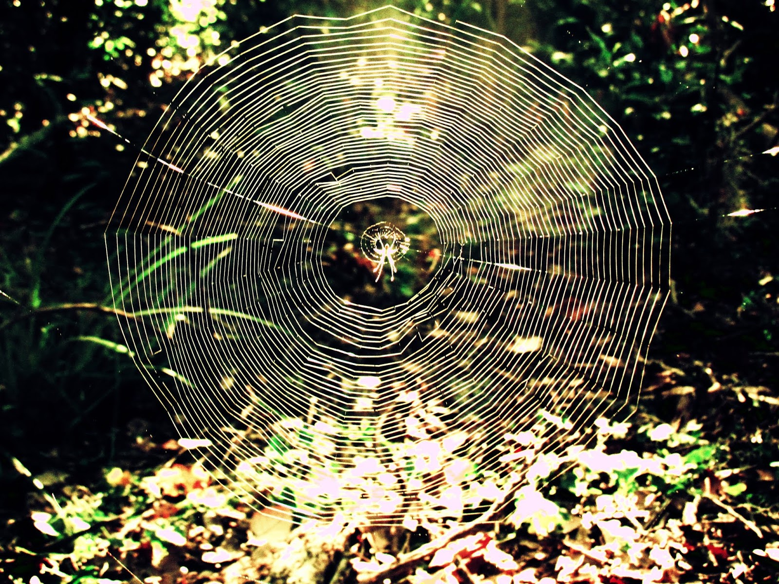 a spiderweb and Florida box spider glistening in the sunlight in the heart of a faery forest