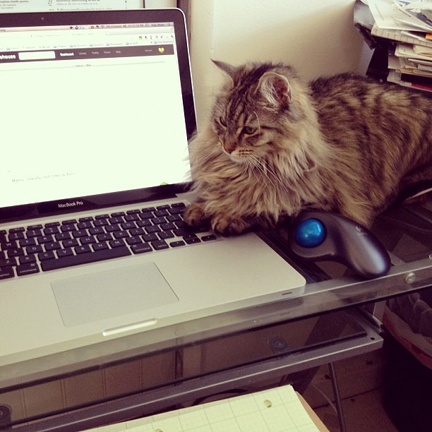 She's either helping me code or waiting to steal my pencil. #theLatter by AMsloan from flickr (CC-NC-ND)
