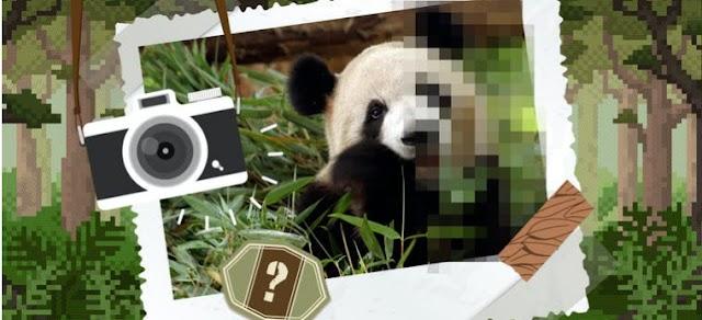 Pixelated Animals Quiz Answers Quiz Facts