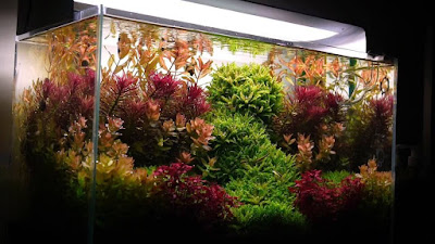 Planted tank Aquascape Dutch