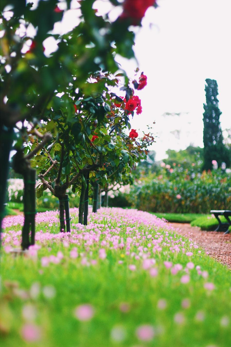 passeio romantico buenos aires