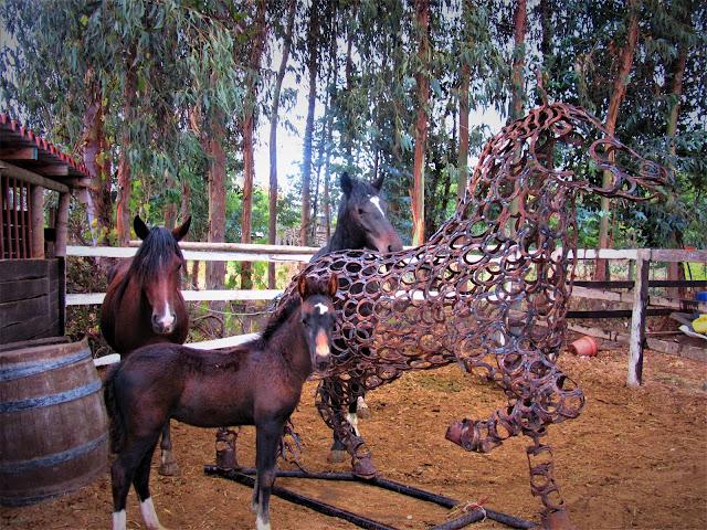 horseshoe horse, Santa cruz
