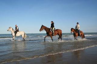 Passeggiate a cavallo da Ravenna